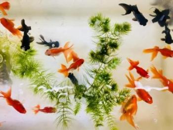 4月を迎える前に知っておきたい金魚鉢理論